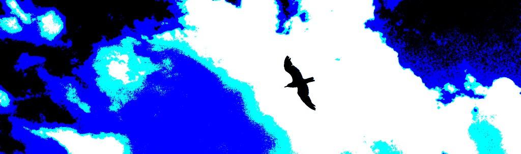 oiseau-2